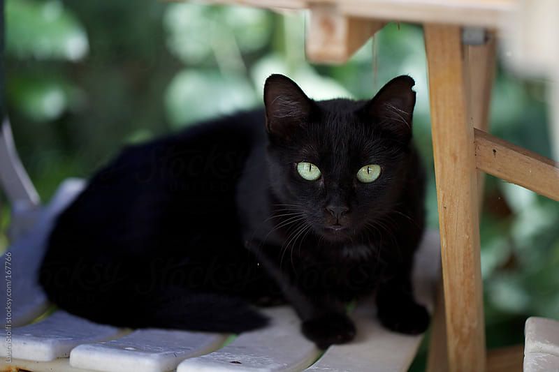 Black cat with green eyes looking straight at the camera by Laura Stolfi for Stocksy United