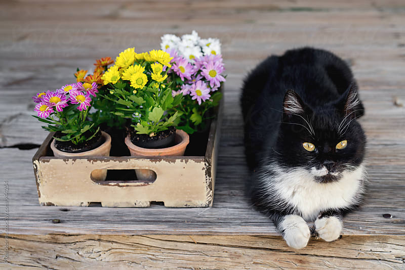 Cat next to crate full of flowers by Pixel Stories for Stocksy United