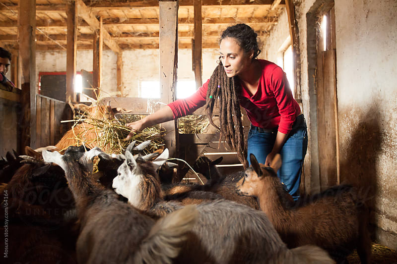 Woman feeding farm animals. by Mosuno for Stocksy United