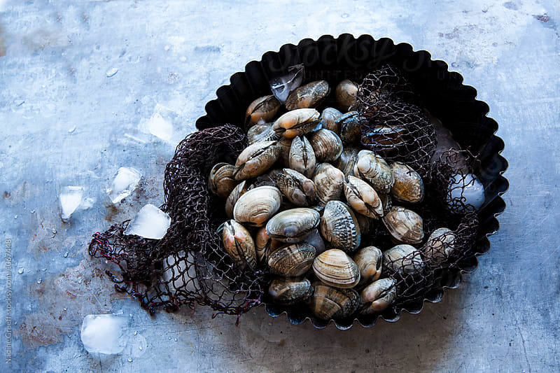 Harvested clams on ice by Nadine Greeff for Stocksy United