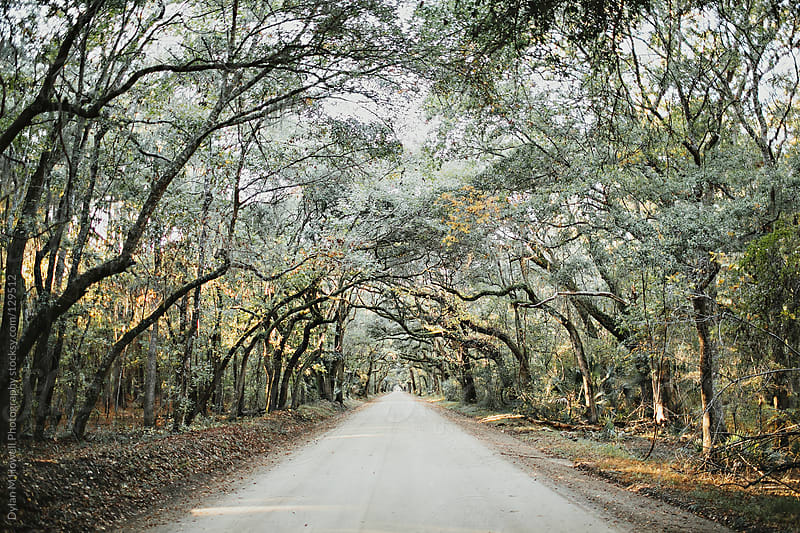 Tree Canopy Road by Dylan M Howell Photography for Stocksy United