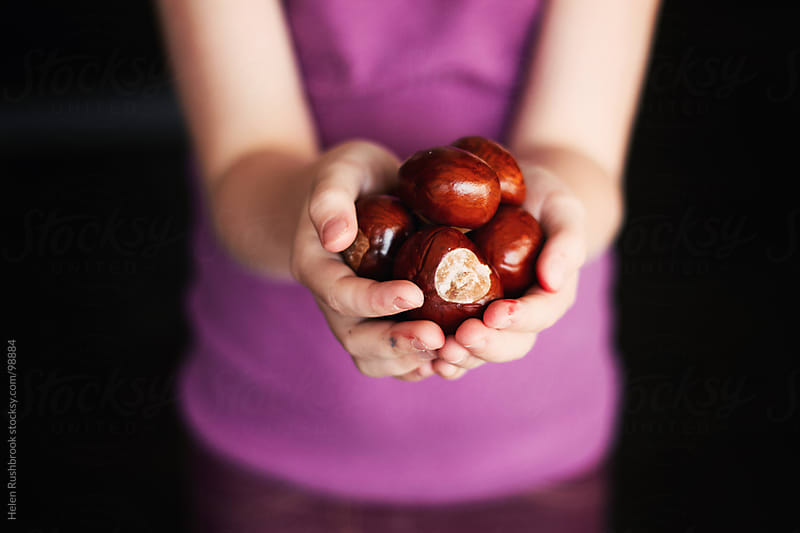 A child's hands full of conkers by Helen Rushbrook for Stocksy United