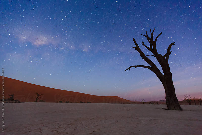 Camel Thorn Trees with milky way at Deadvlei at night over dunes, Namibia, Africa by Fotografie Daniel Osterkamp for Stocksy United
