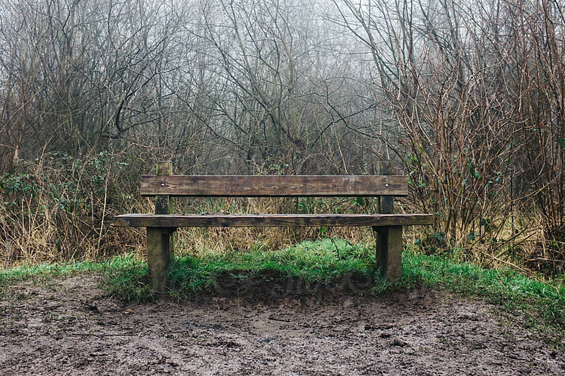 A wooden bench surrounded by branches during winter by Darren Seamark for Stocksy United