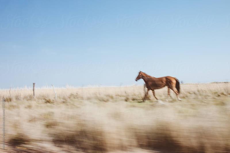 Running horse by michela ravasio for Stocksy United
