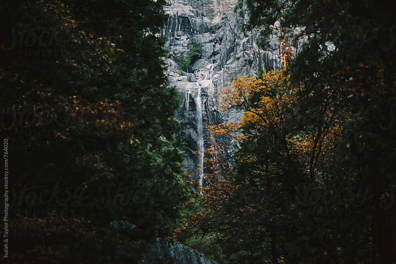 Waterfall through trees by Isaiah & Taylor Photography for Stocksy United