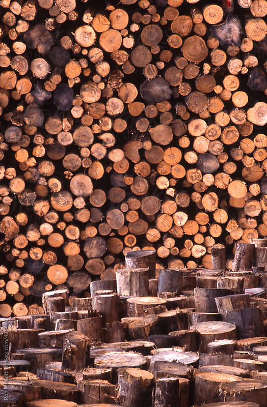timber trees stacked in a lumber yard awaiting processing by Ron Mellott for Stocksy United