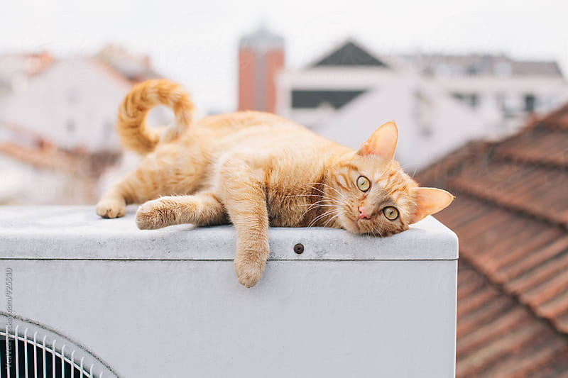 Cat outdoors by VeaVea for Stocksy United