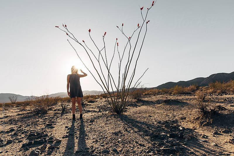Pregnant Blonde Woman Standing Next To Desert Ocotillo Plant by Luke Mattson for Stocksy United