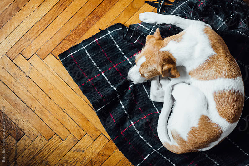Above shot of a dog sleeping on the blanket by Boris Jovanovic for Stocksy United