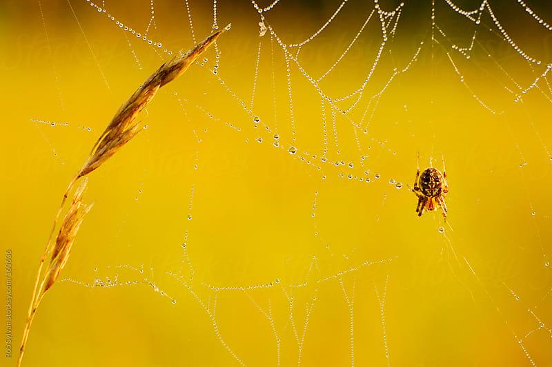 Tiny Spider by Rob Sylvan for Stocksy United