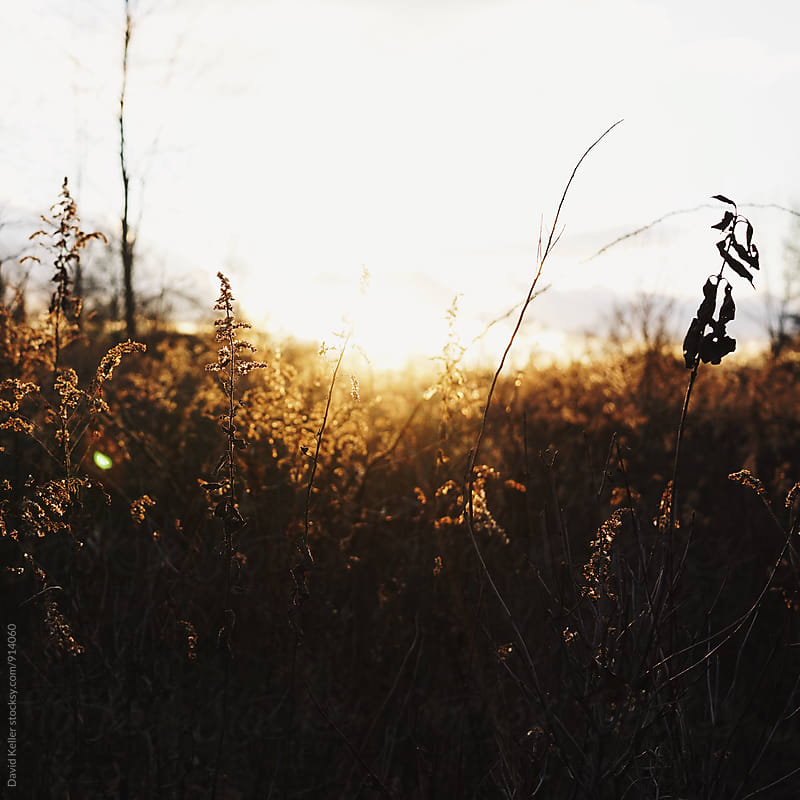 Sunset in the Field by David Keller for Stocksy United