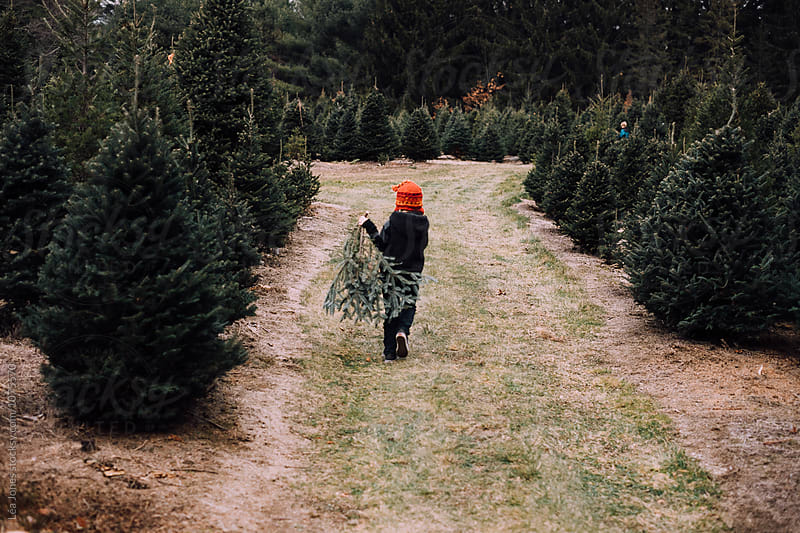 kid getting christmas tree by Léa Jones for Stocksy United