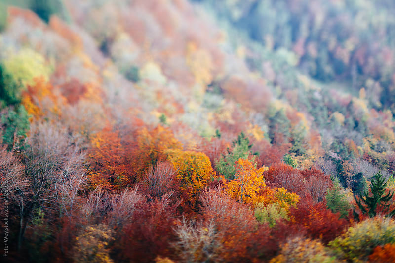 Tilt shift miniature view of autumn forest by Peter Wey for Stocksy United