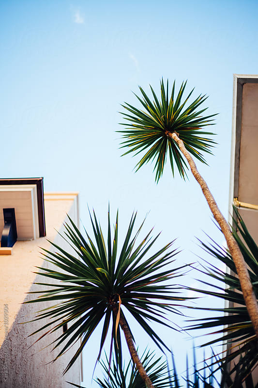 Palm Tree's outside Building by Kara Riley for Stocksy United