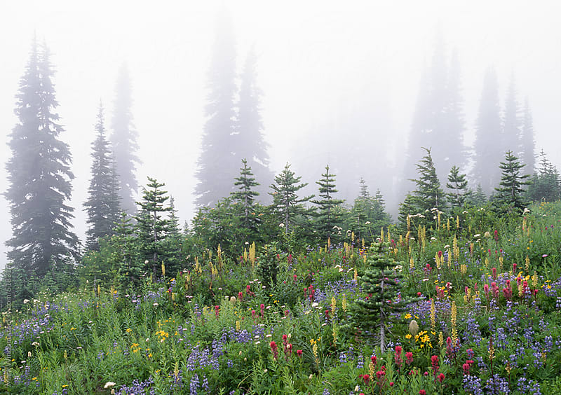 Wildflower meadow and fog by Mark Windom for Stocksy United