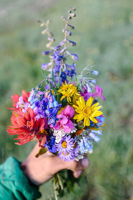Bouquet of wild wildflowers in hand by Matthew Spaulding for Stocksy United
