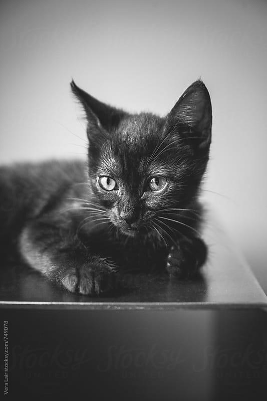 Black kitten by Vera Lair for Stocksy United