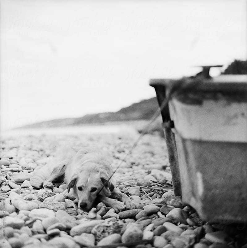 Dog alone at the beach by Tommaso Tuzj for Stocksy United