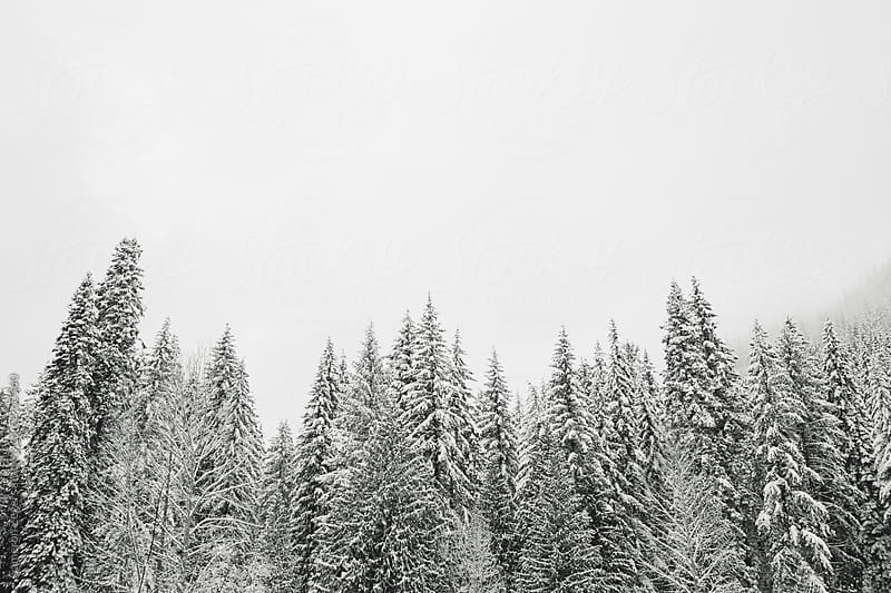 snow covered trees by Cameron Zegers for Stocksy United