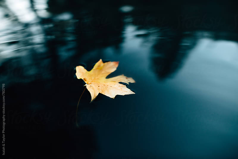 Leaf floating in water by Isaiah & Taylor Photography for Stocksy United