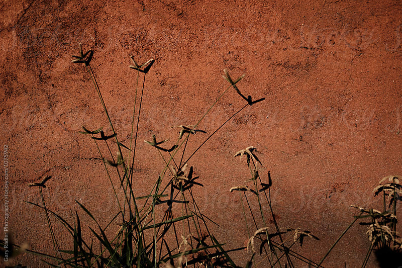 Weeds against a Rendered Wall in Evening Light by Gary Radler Photography for Stocksy United