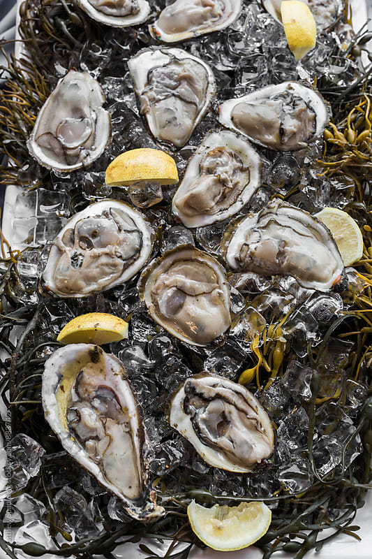 Raw oysters on the half shell shucked on ice by Matthew Spaulding for Stocksy United