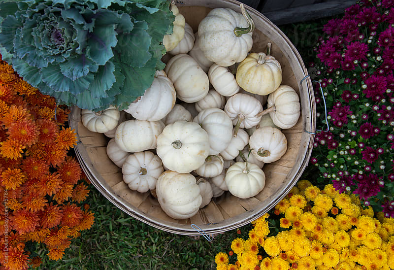 Basket filled with small white pumpkins and autumn flowers on display at a shop by Cara Dolan for Stocksy United