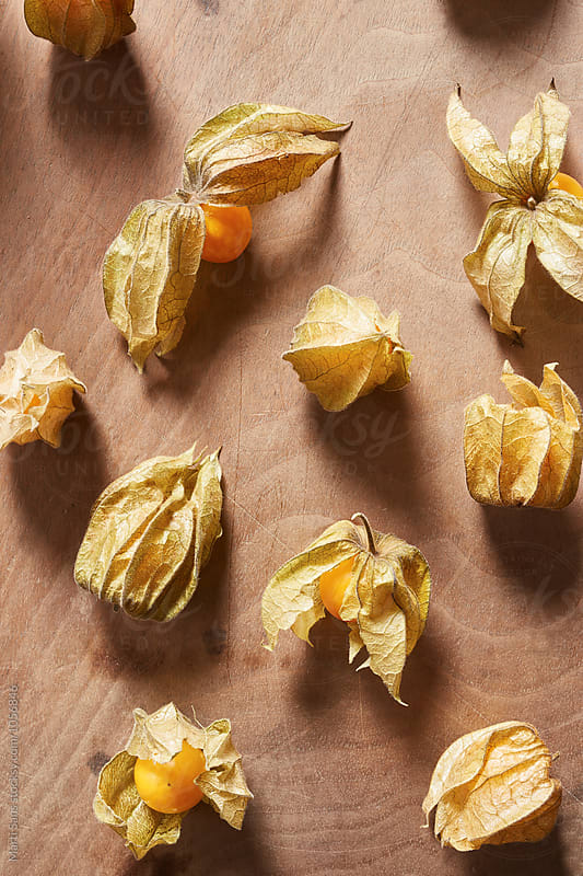 Physalis pattern background by Martí Sans for Stocksy United