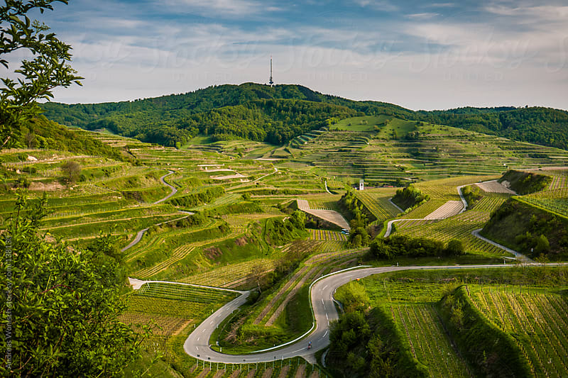Road through Vine Yards in German Kaiserstuhl Region by Andreas Wonisch for Stocksy United
