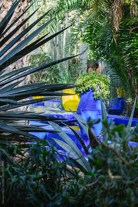Looking into a beautiful botanic garden. by Darren Muir for Stocksy United