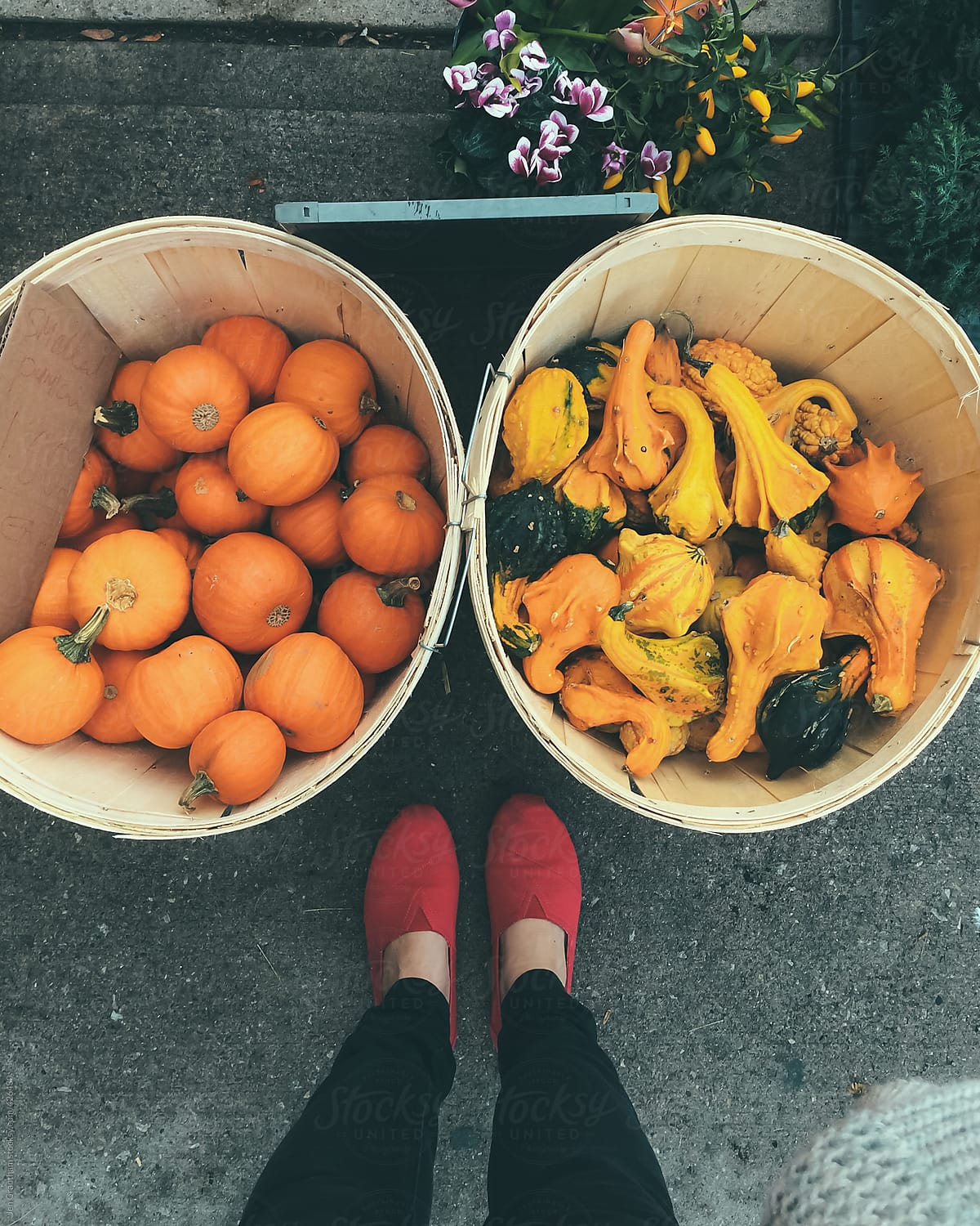 Pumpkins at outdoor market by Jen Grantham for Stocksy United