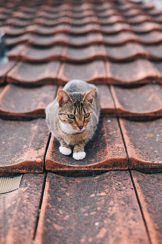 Cat lying on the roof  by VeaVea for Stocksy United
