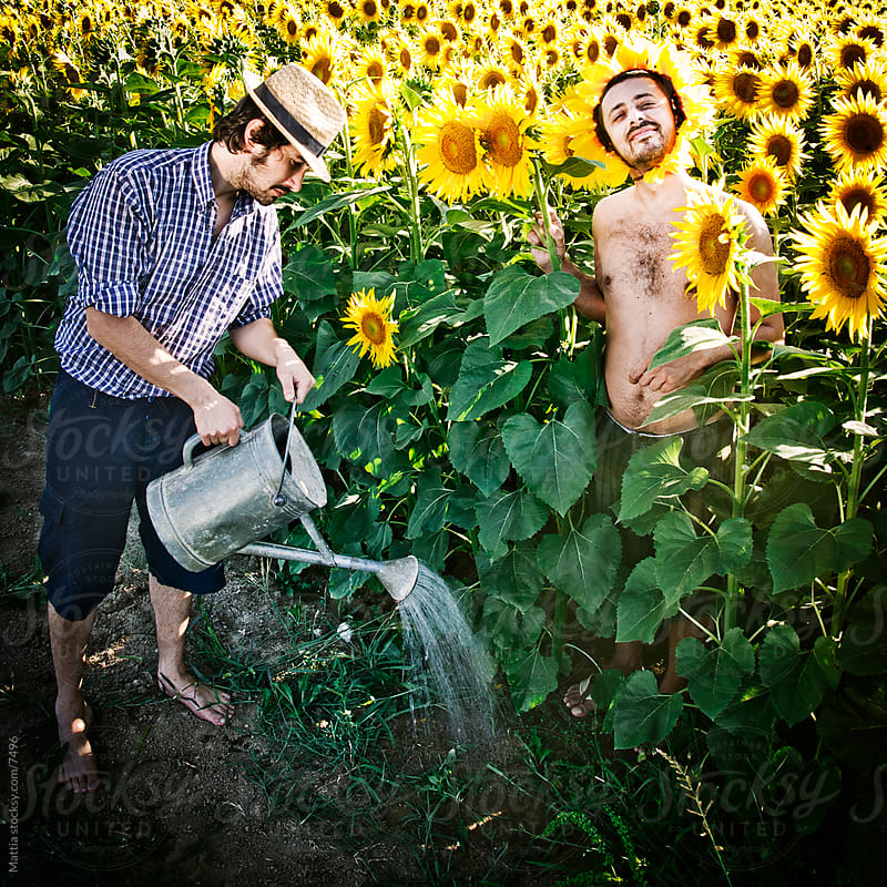 Hose down the Super Sunflower by HEX. for Stocksy United