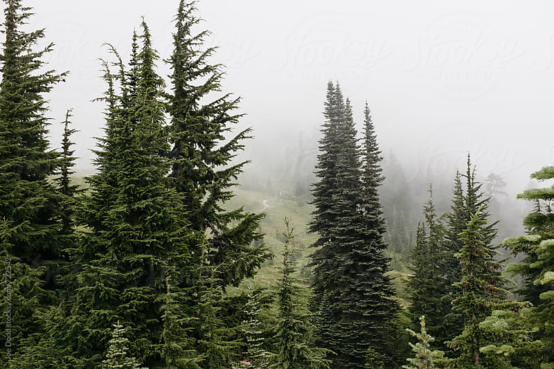 Mount Rainier Trees by Joe Dodd for Stocksy United