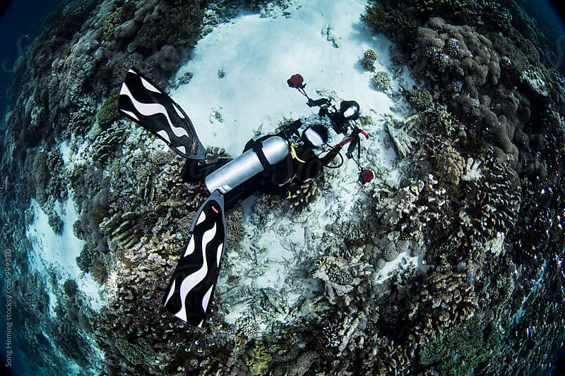 underwater photographer take photo for coral by Song Heming for Stocksy United