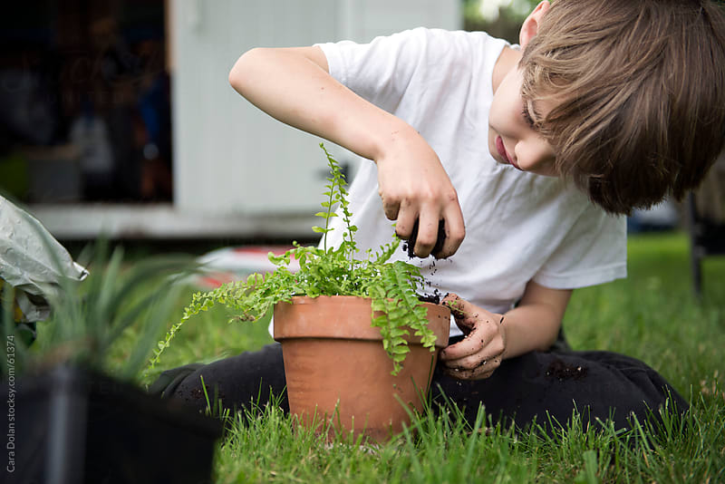Boy sprinkles soil as he re-pots a young fern plant  by Cara Dolan for Stocksy United