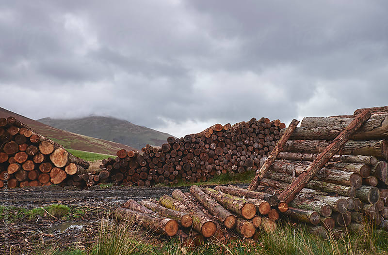 Timber stacked on Mountainside. Cumbria, UK. by Liam Grant for Stocksy United