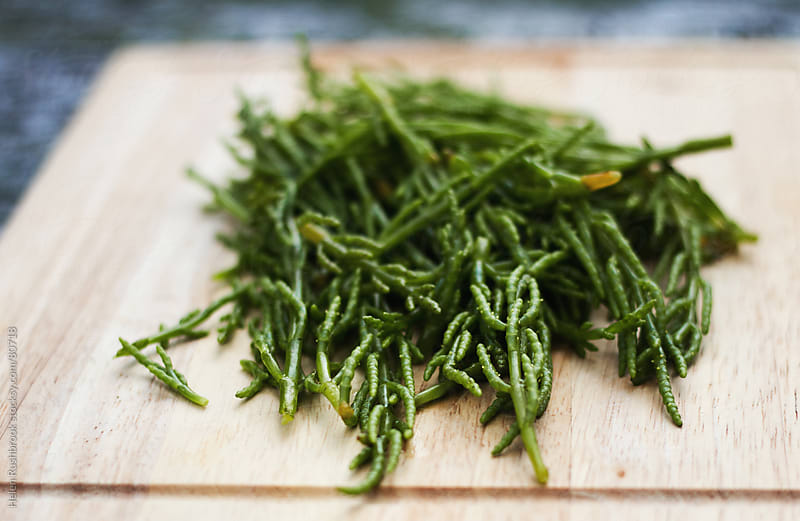 Marsh Samphire freshly picked by Helen Rushbrook for Stocksy United