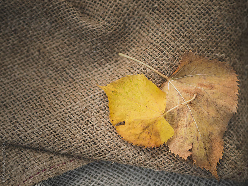 Autumn Leaf Backgroung by HEX. for Stocksy United