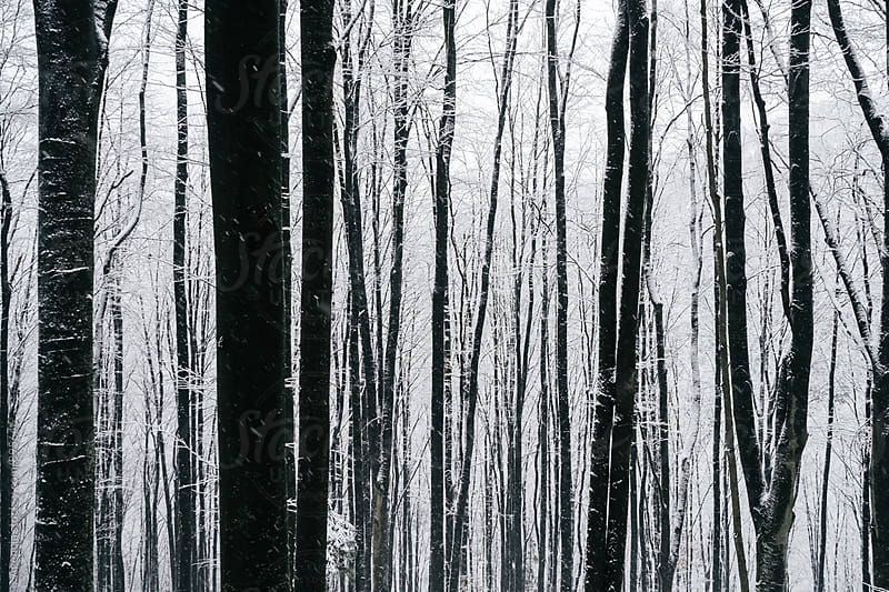 Frozen Forest by Agencia for Stocksy United