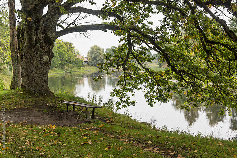 Bench underneath an oak tree, near a river by Melanie Kintz for Stocksy United