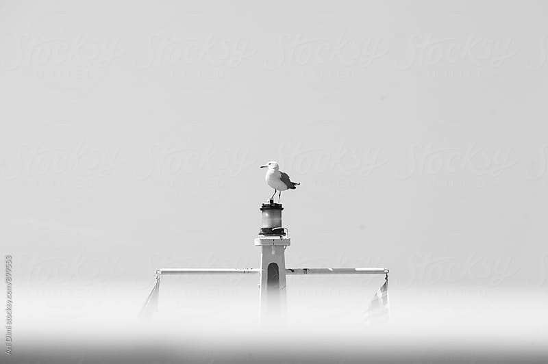 Seagull perched on post by Ani Dimi for Stocksy United