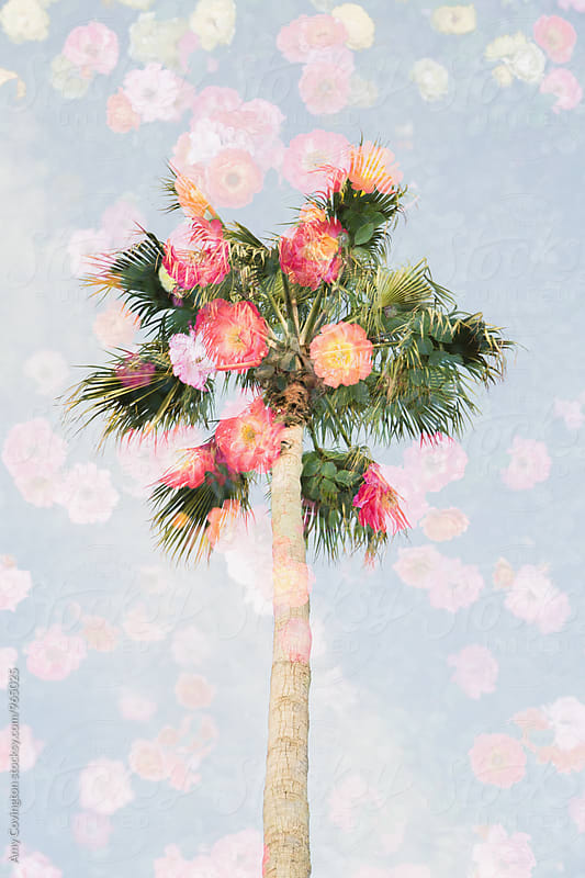 Double exposure of colorful flowers and a palm tree by Amy Covington for Stocksy United