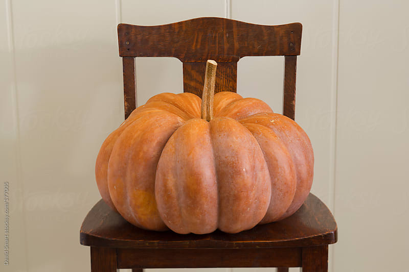 Cinderella Pumpkin on an old chair by David Smart for Stocksy United