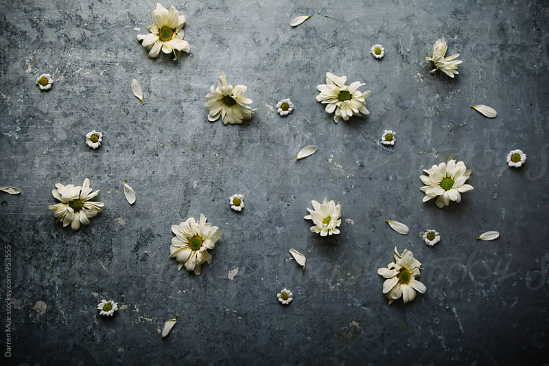 White and yellow flowers on a grungy metal background. by Darren Muir for Stocksy United