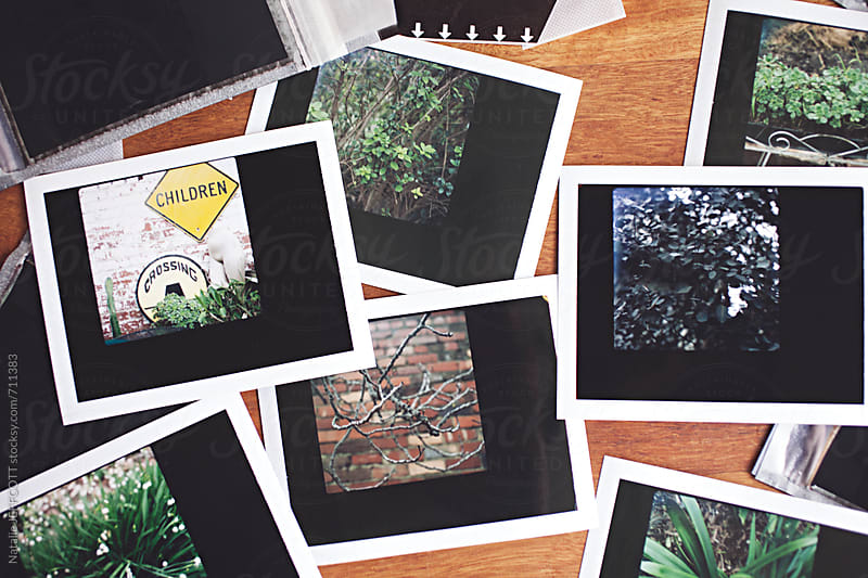 instant peel apart / polaroid film prints of trees on a wooden table top by Natalie JEFFCOTT for Stocksy United