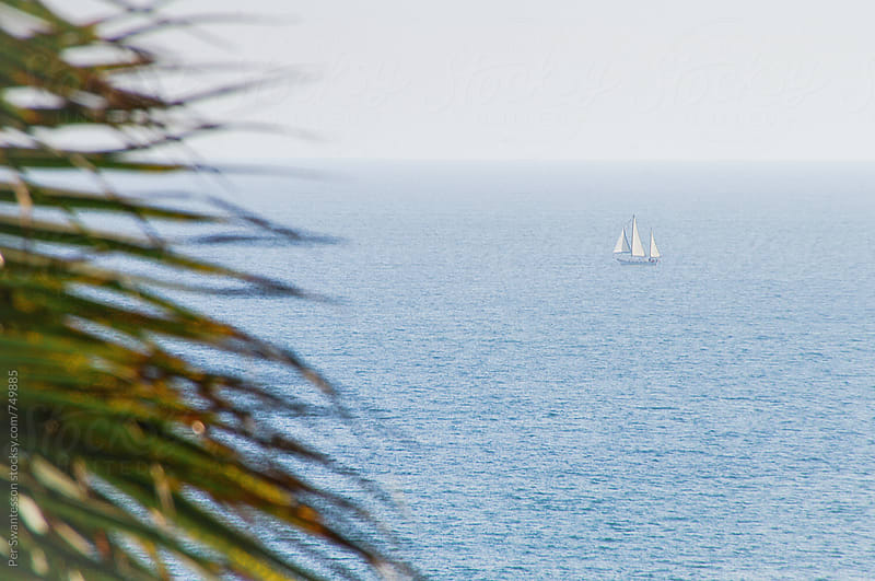 Sailboat on calm waters, seen from palm beach by Per Swantesson for Stocksy United