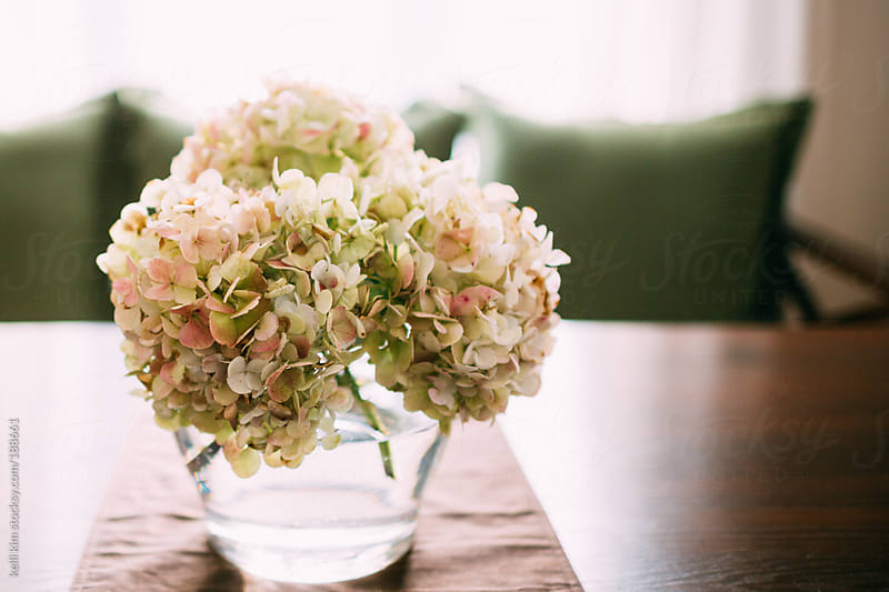Antique White Colored Hydrangeas On Table by Kelli Seeger Kim for Stocksy United