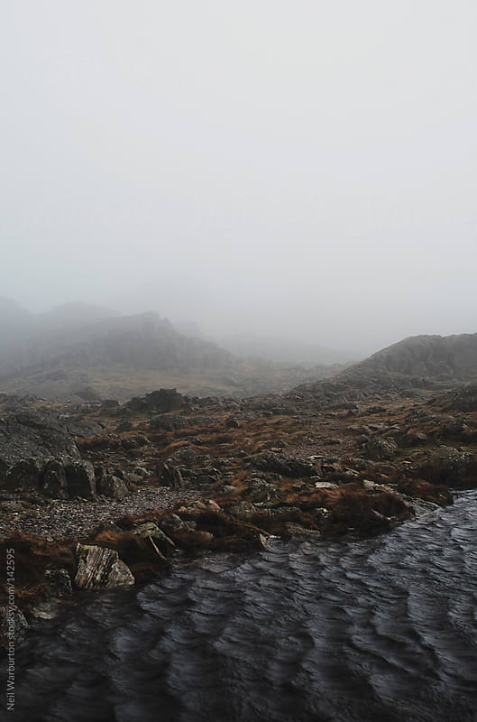 Mist Wilderness by Neil Warburton for Stocksy United